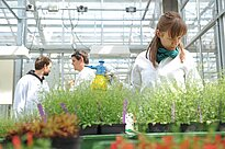 At the greenhouse, women sprinkles plants with water